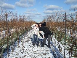 picture of Interns in Field of grape vines